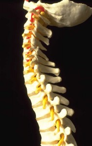spinalcolumn